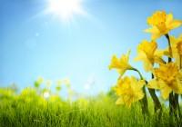 alquilar en primavera